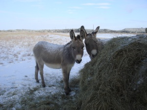 Donkeys - Sweetie Pie and Mama Rose