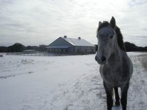 Smokey, Cowboy's mustang, wandering through the cold and posing for the perfect picture!