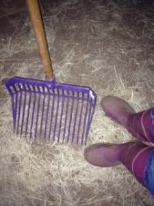 Essential farm girl needs - pink boots and a purple muck rake!