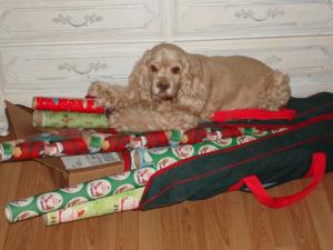 Dog Photo - Madison