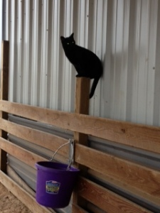 Cat Photo - Nightmare perched in the horse stalls