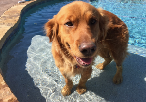 My Farmtastic Life - Max in the Pool