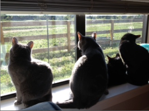 Cat Photo - Shadow, Chip, Grizzly and Bear