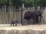 Photo - Baby elephants at the Fort Worth Zoo