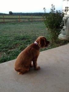 Dog Photo - Maybelle on the porch