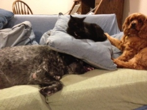 Dog and Cat Photo - Maybelle, Goober, Willie