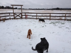 Dog photo - dogs playing on ice