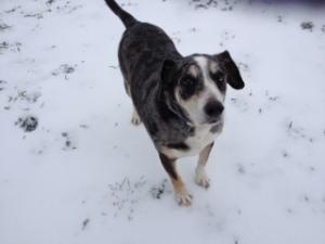Dog Photo - Goober on the ice