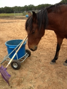 Horse Photo - River with muck bucket