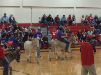 Donkey Basketball Photo - Donkey sans rider