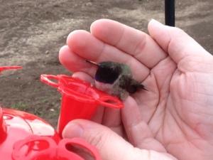 Spring Photo - Holding Hummingbird on feeder