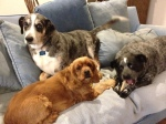 Dog Photo - Goober, Dixie, Maybelle