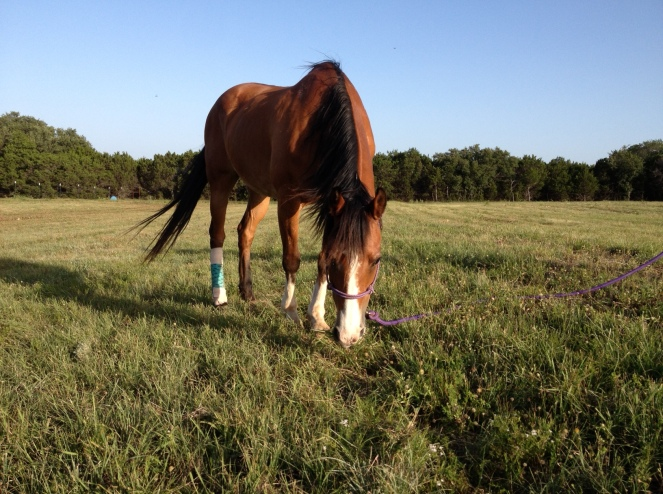 Horse Photo - Sweet Suzy Q in the pasture
