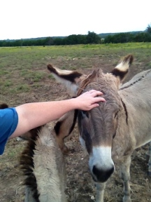 Donkey Phot - Mama Rose getting paid