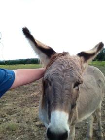 Donkey Photo - Mama Rose