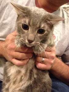 Cat Photo - Chip