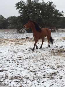 Horse Photo - Ranger in the snow