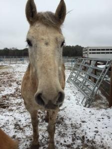 Horse photo - Smokey says hi.