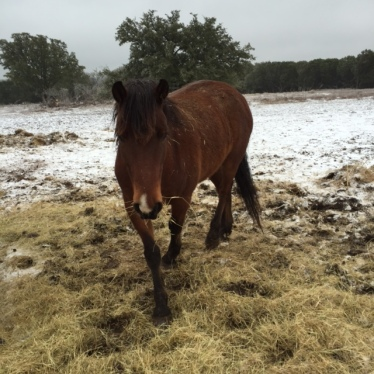Horse Photo - River coming in for scratches on a cold winter day.