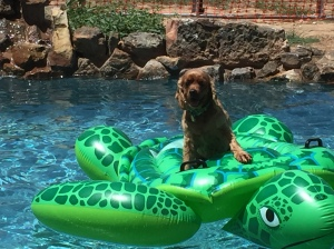 Farm Citter Photo - Maybelle in the pool