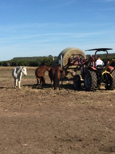 My Farmtastic Life - Cowboy on a Tractor