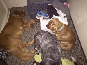 My Farmtastic Life - Dogs and cats in storm shelter