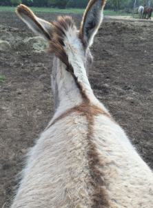 My Farmtastic Life - Sweetie Pie the donkey and her Easter Cross