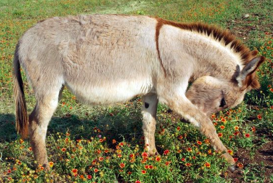 My Farmtastic Life - Sweetie Pie the Easter Donkey