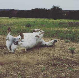 My Farmtastic Life - Smokey rolls with glee
